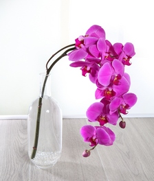 Pink Bottled Orchid